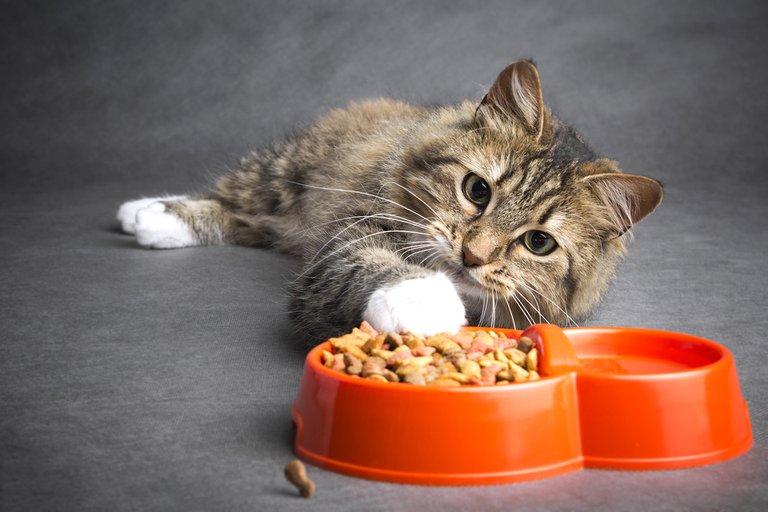 Как узнать, хорошего качества корм для кошек?